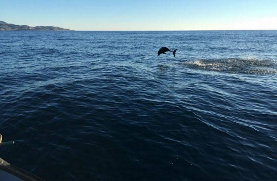 residence_delfini_in_mare